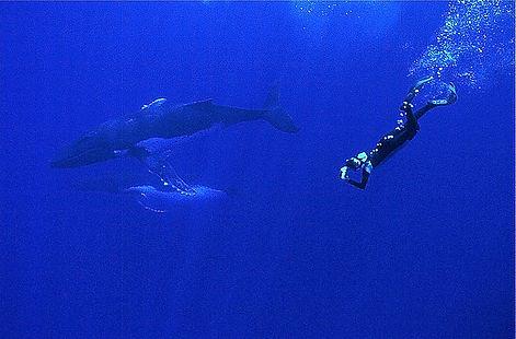 Isabelle Dupré et baleines à bosse (Copyright Gérard Soury)