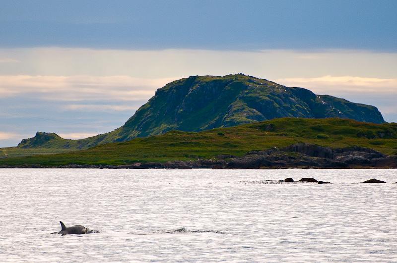 Orque en Norvège
