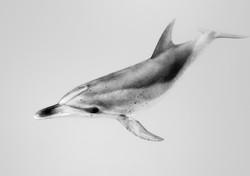 Isabelle_Dupré_-_Dolphin1