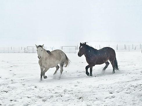 SnowHorse2.jpg