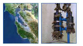 USGS using Turner Designs fluorometers in Plankton Dynamics Project