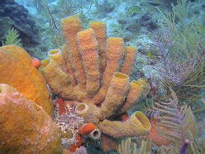 Aquarius Undersea Laboratory Sponge Study Florida Keys National Marine Sanctuary