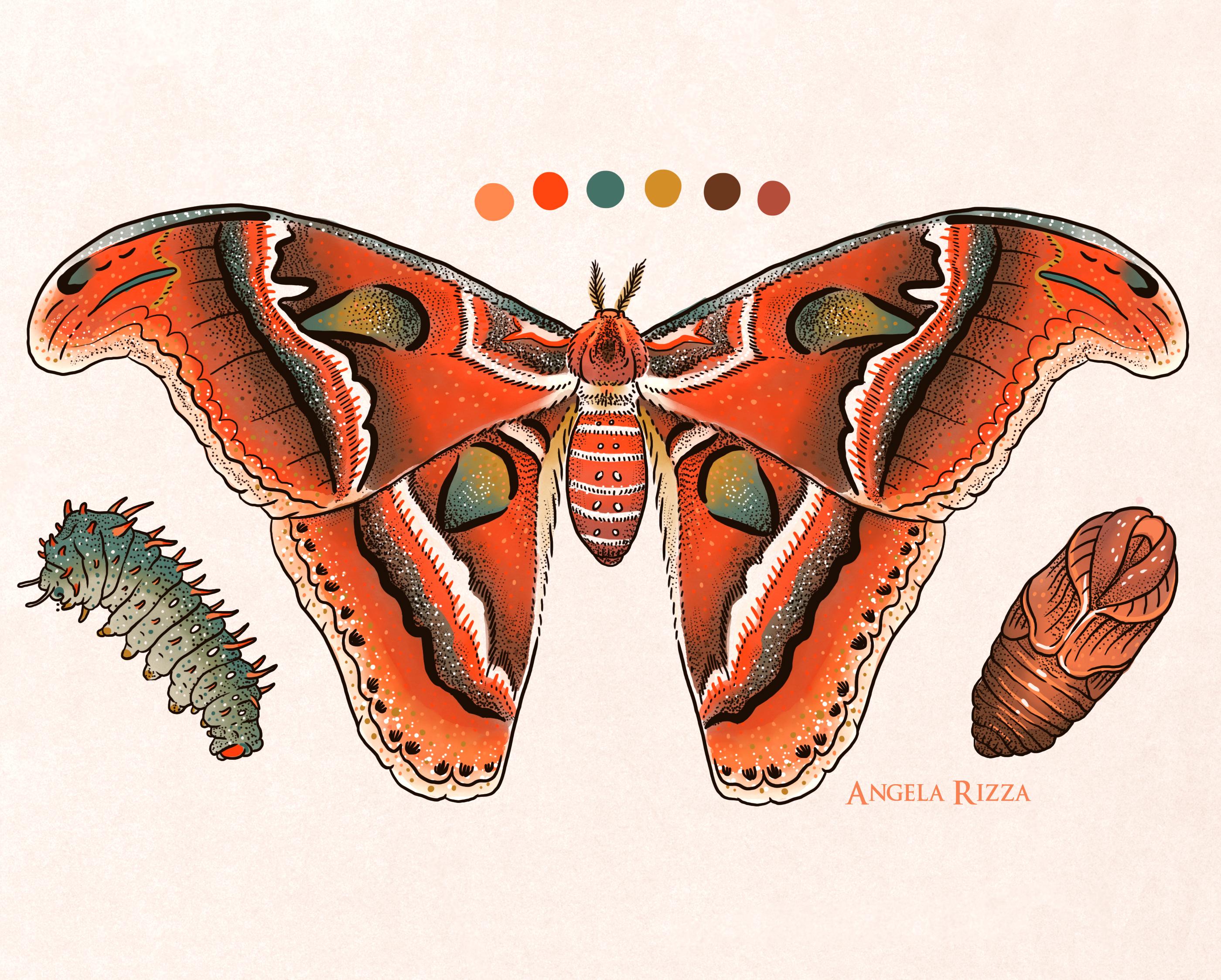 6 metamorphisis