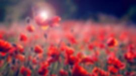 flores rojas.png