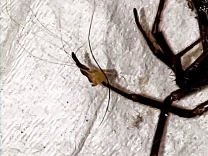 WHERE ARE THE GLASS SPECS COMING FROM WITH MORGELLONS DISEASE?