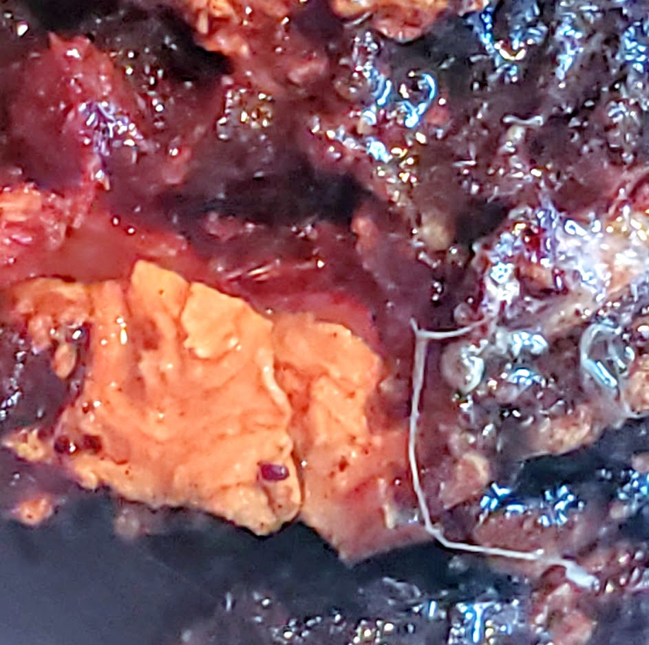 The bark was blood red when broke in half.  You could see the Morgellons Larva and Fibers.  The yellow sacs were larger and surrouding wood was dark red.  The fibers intertwined inside the bark and the wood felt spongy.