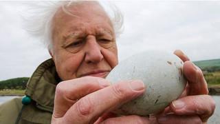 David Attenborough's Wonder of Eggs
