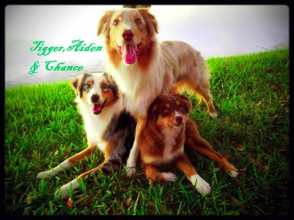 ASF | Happy Tails