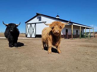COW BARN PIC.jpg