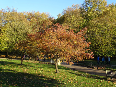 Autumn colours are here at last!