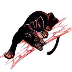 Puma - ilustración editorial