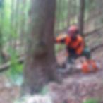 Holzinschlag