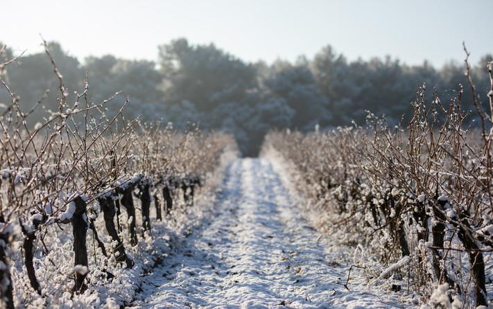 Vin du Luberon - VincentAGNES-12.jpg
