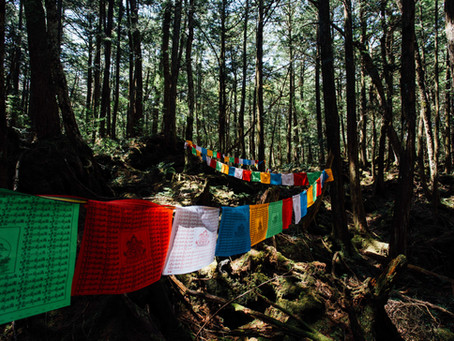 La forêt hantée d'Aokigahara au Japon.