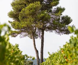 Vin du Luberon - VincentAGNES-6.jpg