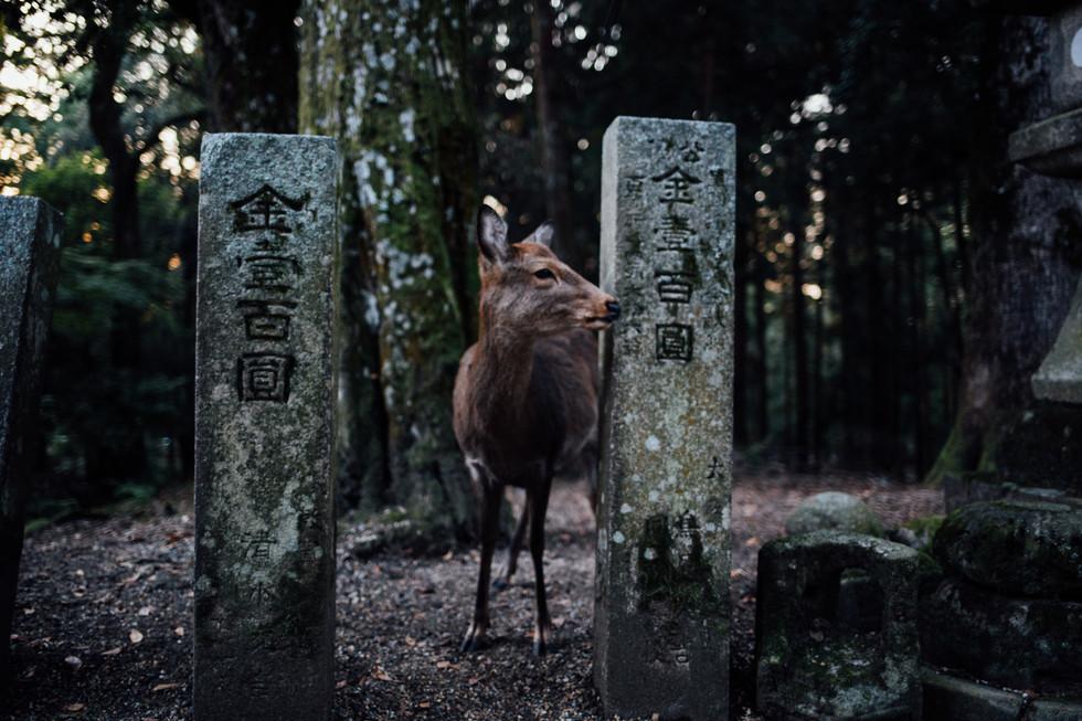 Japon 2019 - VincentAGNES-23.jpg