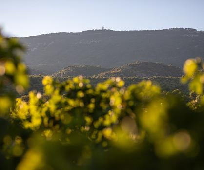 Vin du Luberon - VincentAGNES-8.jpg