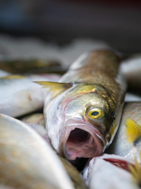 Fish and Sea Life