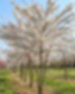 Screen Shot 2020-05-11 at 22.03.03.png