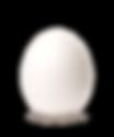 Egg_edited.png