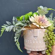 Litte succulent pot in pot face.
