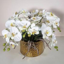 An abundance of orchids, yet exudes simp