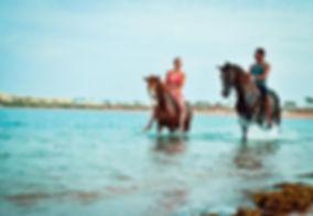 swimming-with-horses-dahab.jpg