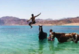 horse-riding-in-dahab-swim.jpg