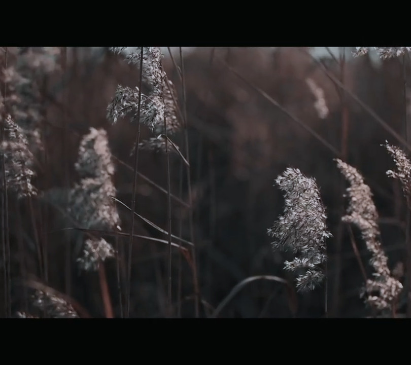 """""""About the tides""""   Sleepwalkers's Station - Official Video"""