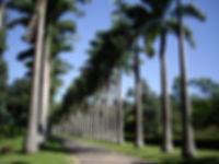 floricultura blumenau floricultura paraíso palmeiras paisagismo