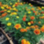 floricultura blumenau floricultura paraíso caixa de flores paisagismo