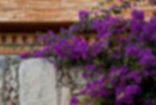floricultura blumenau floricultura paraíso trepadeiras paisagismo