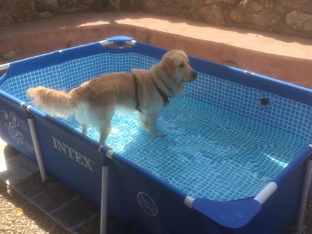 Piscina para perros (con agua potable)