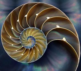 spiralShell_Resize.jpg