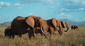 The_Elephant_Queen_Unit_Photo_03.jpg
