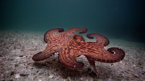 My_Octopus_Teacher-still-2.jpg