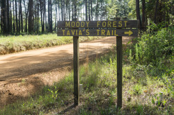 Washington_Baxley_moodyforest1