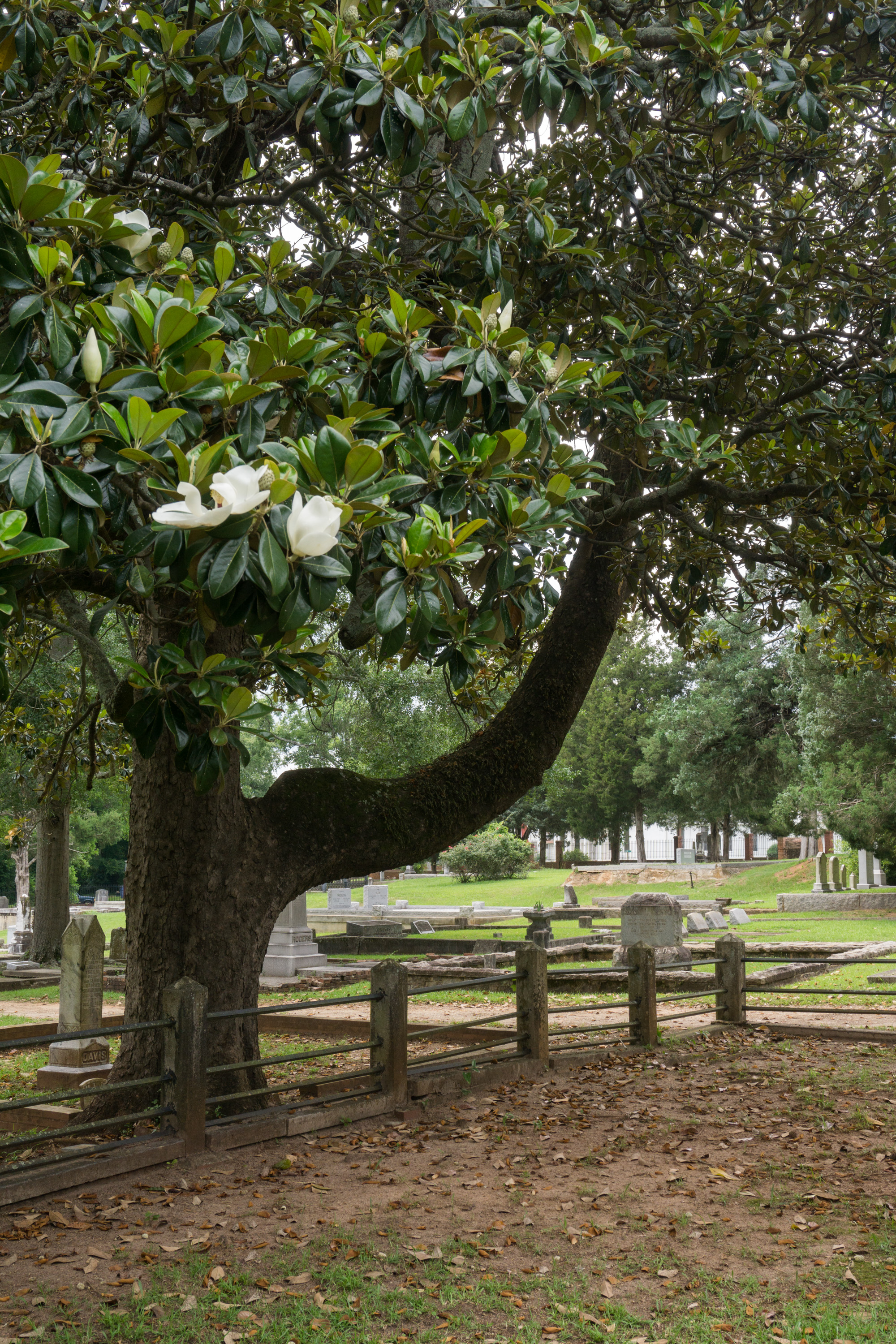 Washington_Sandersville_cemetery5