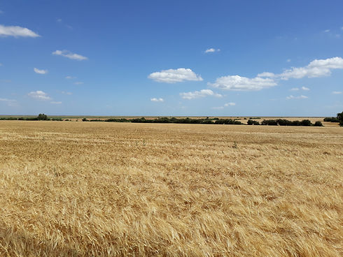 fields 1.jpg