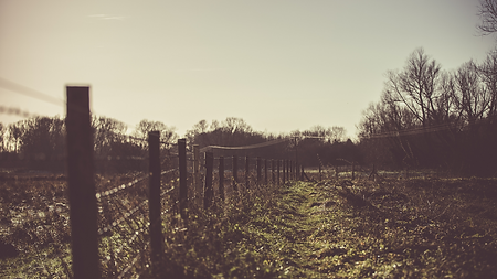 L'enjeu des clôtures en Sologne