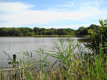 Un étang de Sologne