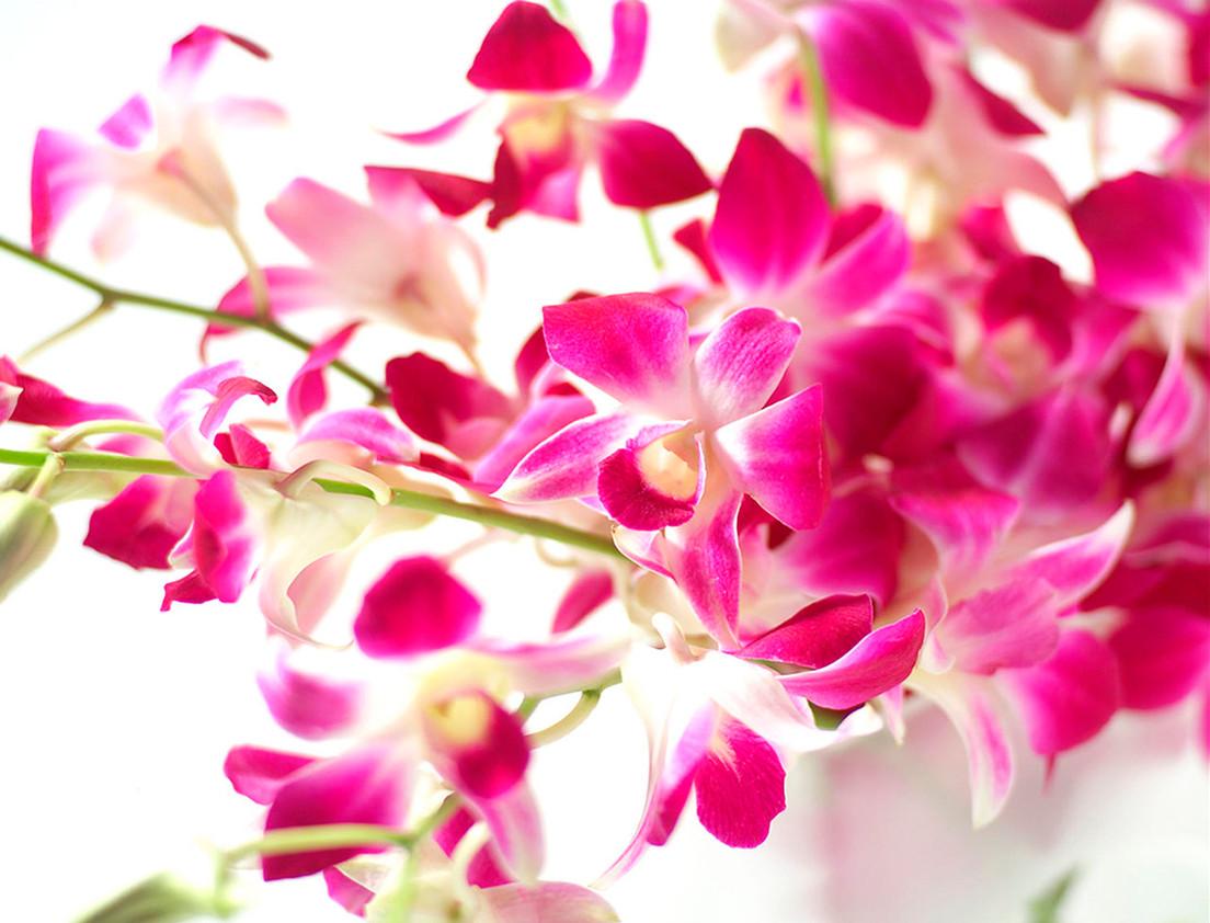 flowers for tesco