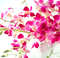 Tesco Flowers