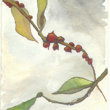 berries on branch
