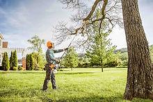 Stihl-pruning.jpg