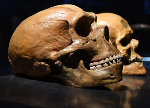 Are We Neanderthal?