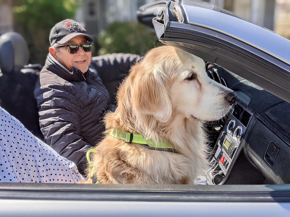 Golden retriever in car