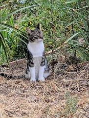 striped cat posing 1.jpeg