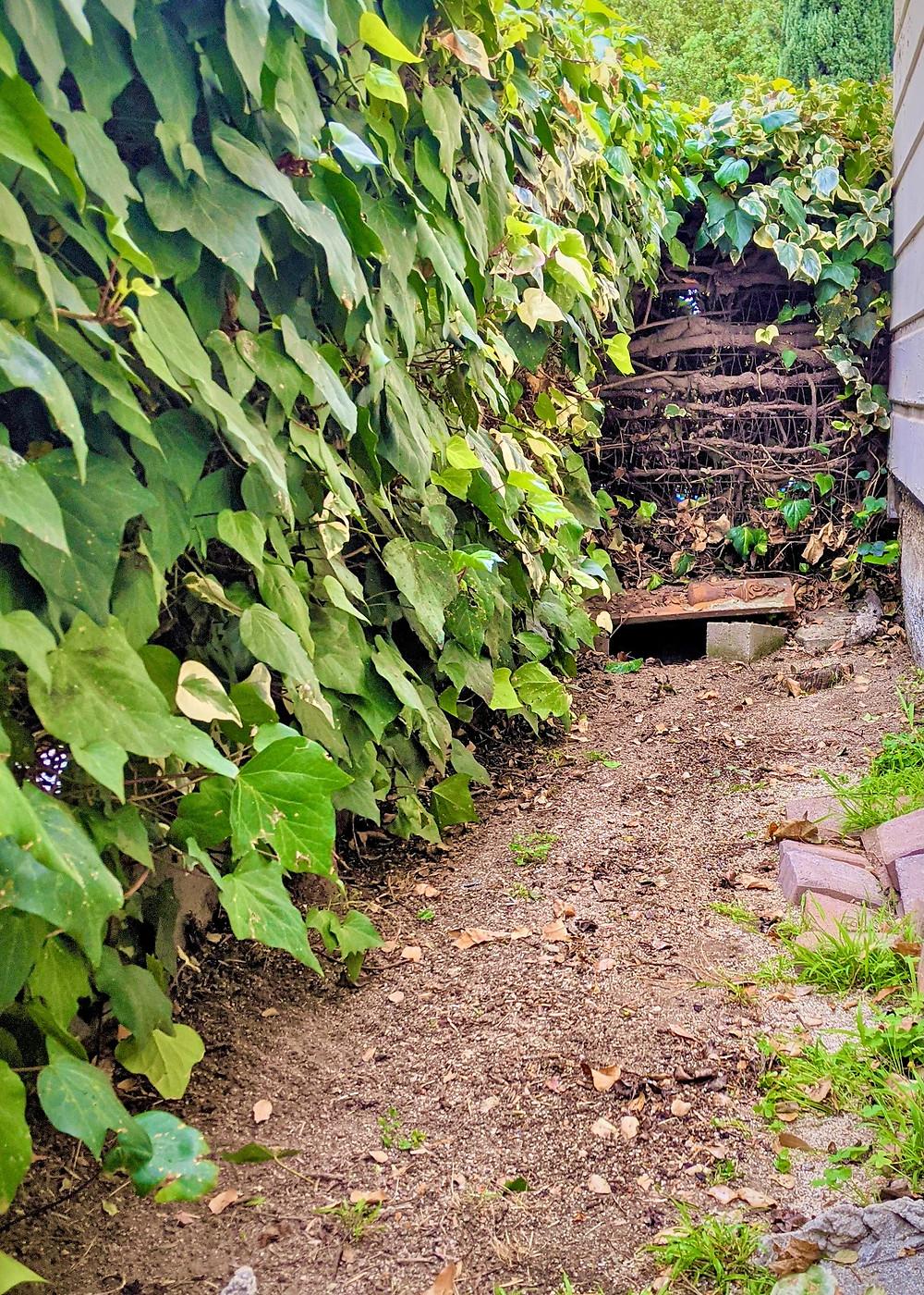 Lawrence's Alley - Desert Tortoise den and refuge from hot summer days