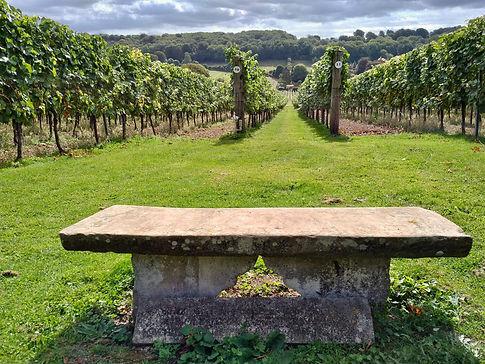 Hambledon Vineyard, UK's oldest commerci